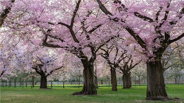 樹木葬のできる霊園や墓地のおすすめサイト比較